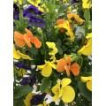 Barquette fleurs comestibles variées multicolores 50 unités +